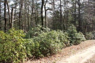3 Ac Pig Trail, Cherry Log GA