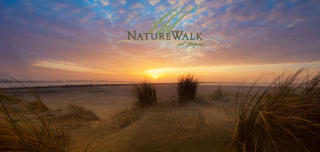 NatureWalk at Seagrove by Kolter Homes