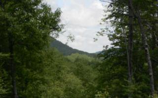Laurel Creek Trail, Cherry Log GA