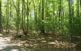 Baberry Lane, Blairsville GA