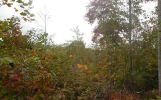 20 Chestnut Oaks, Murphy NC