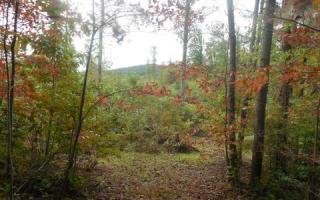 1 Chestnut Oaks, Murphy NC