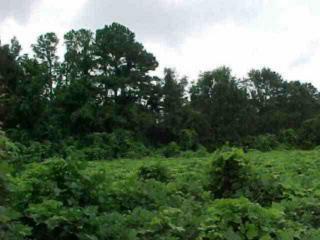 Land Bruner Road, Dothan AL