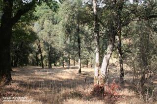 21911 Oak Meadows Road, Grass Valley CA