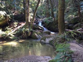 21811 Bear Creek Road, Los Gatos CA