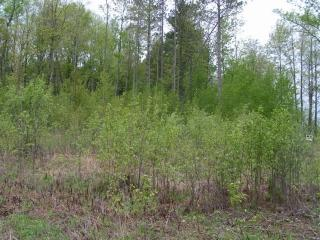 5.33 Acres N 28th Avenue, Wausau WI