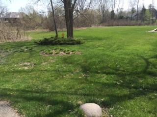 22765 Wagon Court, Deer Park IL
