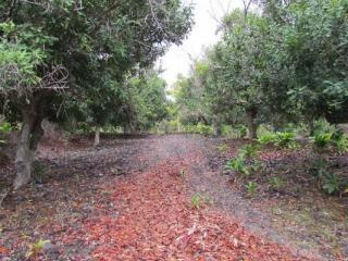 88-2512 Milolii Road, Captain Cook HI