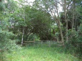 Elizabeth Lane, Osteen FL