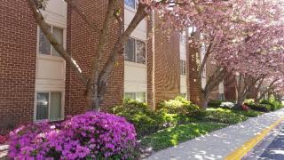 2301 Glenallan Ave, Silver Spring, MD 20906