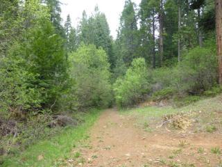 Bottini Apple Ranch Road #12, Mi-Wuk Village CA