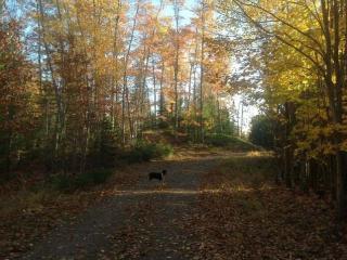 34 Lily Lake Trail, Land O' Lakes WI