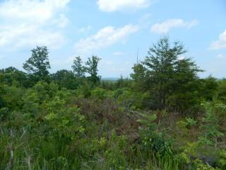 Deer Run Road #54 55, Trenton GA
