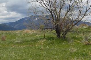 Behind 338 Hondo Seco Road, Arroyo Seco NM