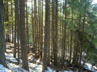 25514 Camp 12 Road, Leavenworth WA