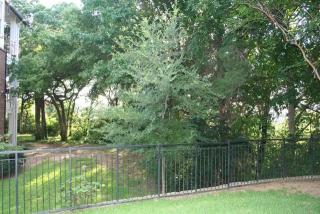 1654 Ascension Bluff Drive #139, Arlington TX