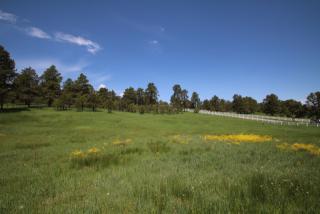 8755 Ponderosa Springs Point, Colorado Springs CO