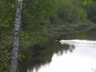 Lot 3 Turtle Rapids Lane, Mercer WI
