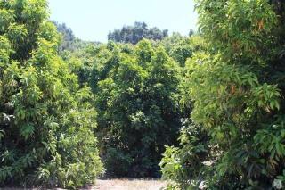 Creek Road, Ojai CA