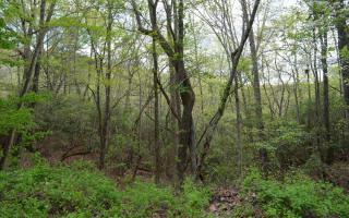 Kanuga Road Trail 2, Hiawassee GA