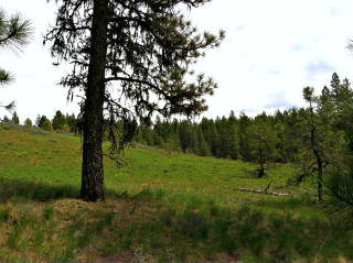 Lot 5 Van Dorn Drive, New Meadows ID