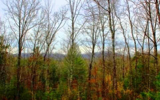 Tr 4 Mull Valley Road, Morganton GA