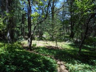 12495 Brookview Drive Circle, Grass Valley CA