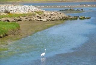 52 Pelican Point, Watsonville CA