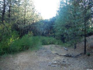 Tawny Lane, Colfax CA