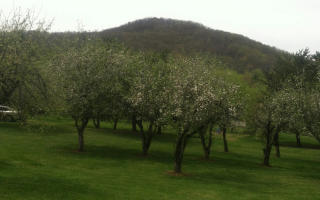 13 14 Forest Cove Trail, Hayesville NC