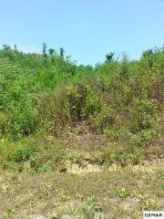 Lehigh Drive, Newport TN