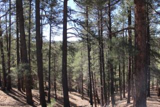 3483 Ancient Trail, Flagstaff AZ
