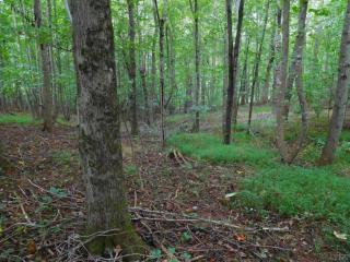 Squirrel Tree, Goode VA
