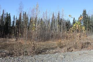 69184 South Denali Vista Drive, Willow AK