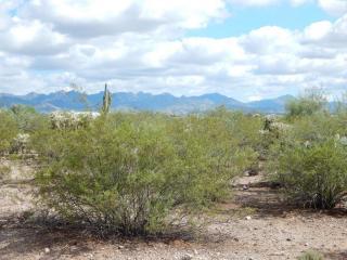 6578 East Camino Del Toro, Sahuarita AZ