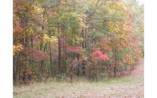 12 Ac Verner Road, Turtletown TN