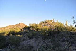 977 South Bill Martin Drive #28, Tucson AZ