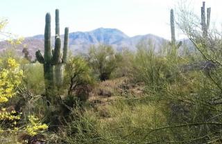 7330 Scopa Trail, Carefree AZ