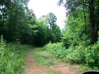 Mouse Creek Trail, Murphy NC