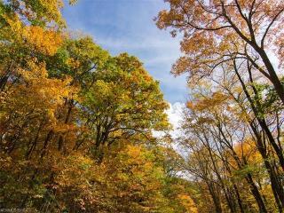 9999 Eagle Bald Trail, Burnsville NC