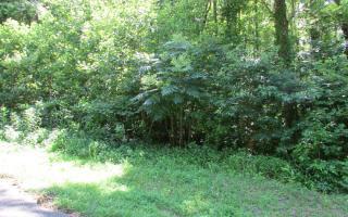 451 Bumpy Trail, Dawsonville GA