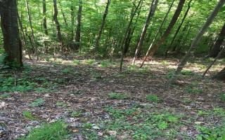 LOT15 Bear Trail #15, Hiawassee GA