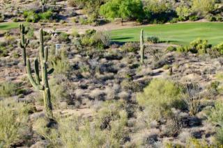 10765 East Cinder Cone Trail, Scottsdale AZ