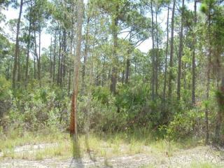 Tbd Tree Top Trail, Fort Pierce FL