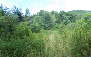 Weaver Creek Mountai, Blue Ridge GA