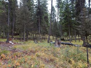 2368 Double Arrow Road, Seeley Lake MT