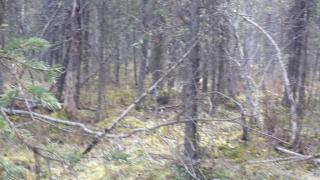 2100 North Meadow Lakes Drive, Wasilla AK