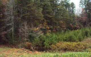 Shoal Creek Pointe, Murphy NC