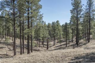 2431 East Del Rae Drive, Flagstaff AZ