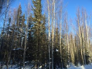 3811 North Wyoming Drive, Wasilla AK